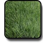 หญ้าเทียม 5ซม สีเขียวผสม