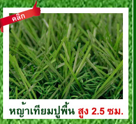 DGrass หญ้าเทียม ปูพื้น 2.5 ซม