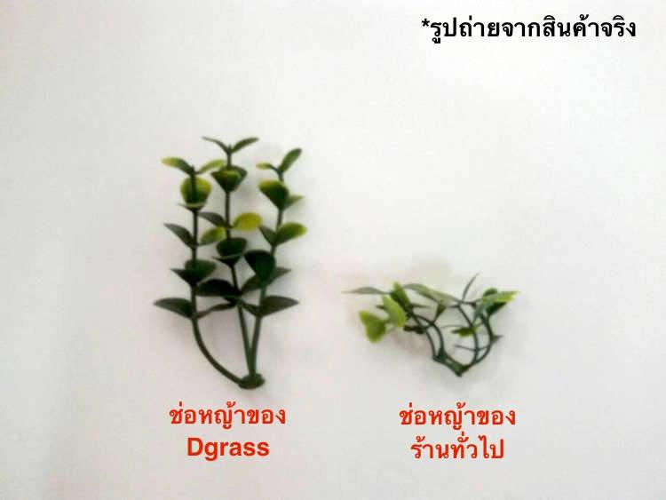 รูปเปรียบเทียบคุณภาพ หญ้าเทียบ ของ Dgrass กับ ร้านทั่วไป